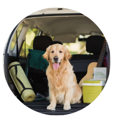 How to Keep Your Pets Safe While Driving